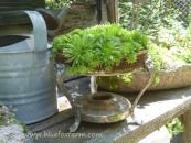 Chafing dish, now filled with hardy succulents