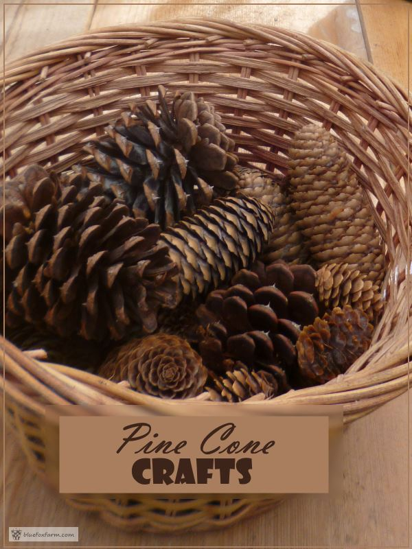 Pine Cones come in many different sizes
