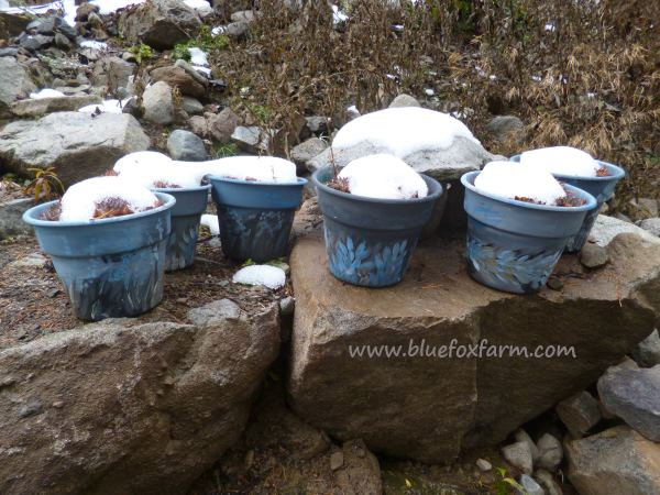 Rustic blue painted pots...