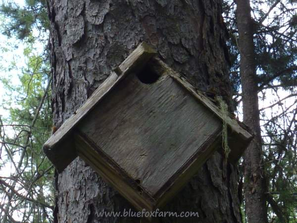 Oddball diagonal bird house - who says they have to be square?