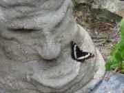 Hypertufa Grumpy getting a kiss from a butterfly...