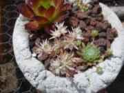 Hypertufa Pinch Pots