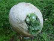 Orbs or Spheres overflow with Sempervivum