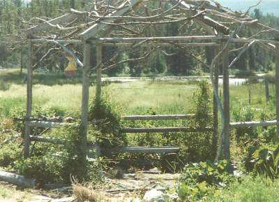 Rustic Twig Gazebo at Tatla Springs