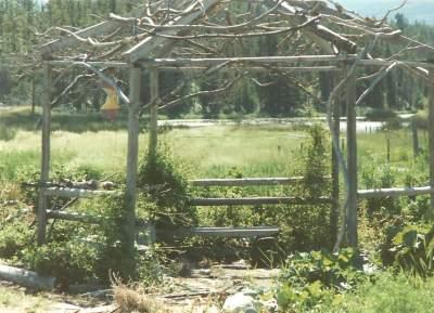 Rustic Twig Gazebo at Tatla Springs