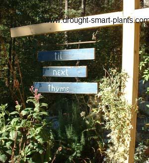 'Til Next Thyme...