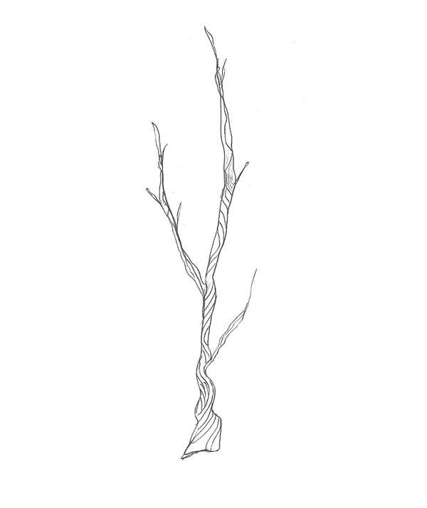 Twig Clipart Hand Drawn Dividers To Decorate Your Blog Or