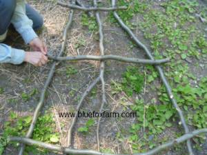 Wiring the twigs together