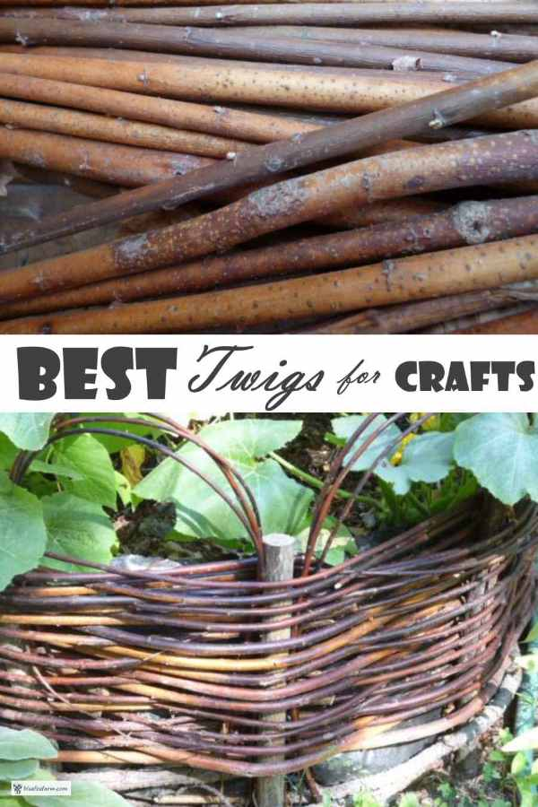 Best Twigs for Crafts