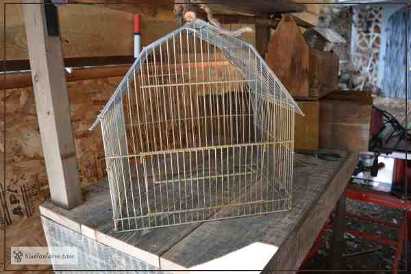 Bird Cage Displayed on a Potting Bench