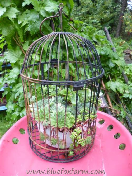 Designed to hold a pot of ferns or succulents, this bird cage never was meant for a bird...