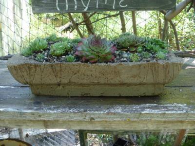 How about a hypertufa planter?