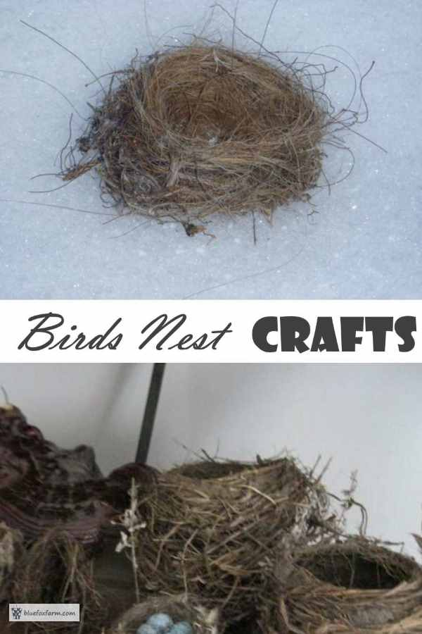 Birds Nest Crafts