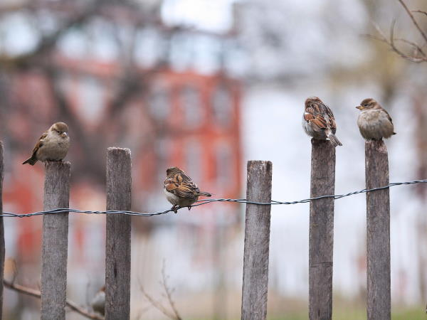 Birds perching on a fence