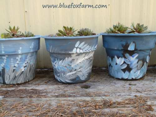 A collection of blue planters; perfect to display Sempervivum in blue shades