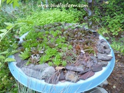 Planters made from Satellite Dishes?  Why not? See more about these on Drought Smart Plants...