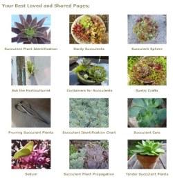 Drought Smart Plants favorite pages...12 Best of 2013