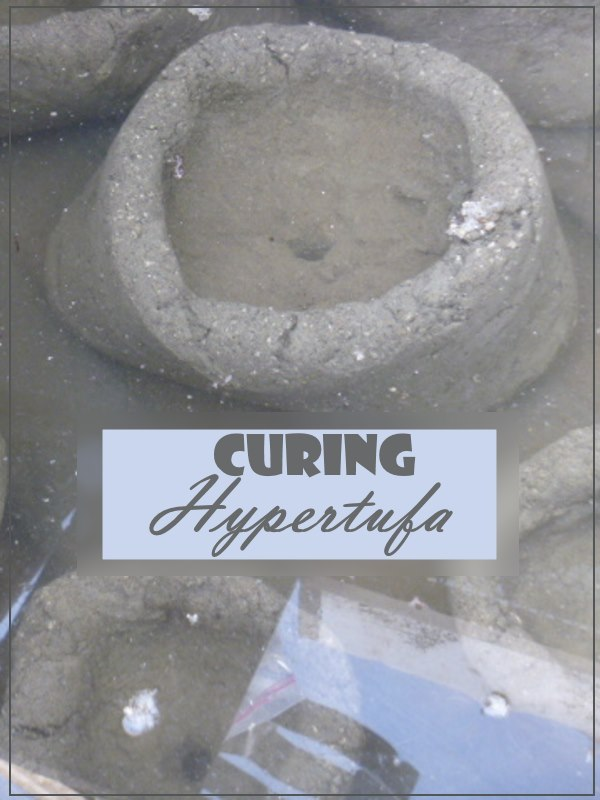 Curing Hypertufa, that all important step...