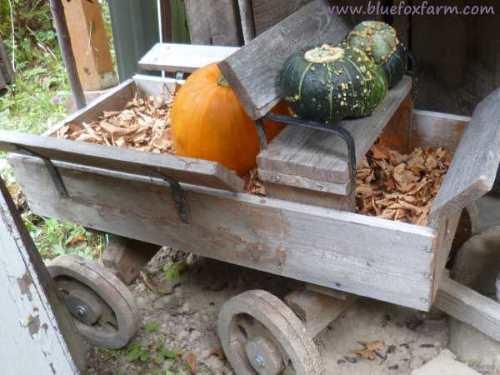 Kids wagon driven by squash...