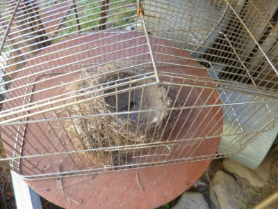 Caged birds nests, sheltering on the porch...