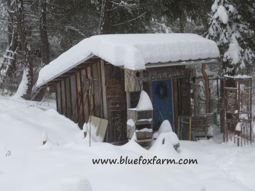 Winter at Blue Fox Farm
