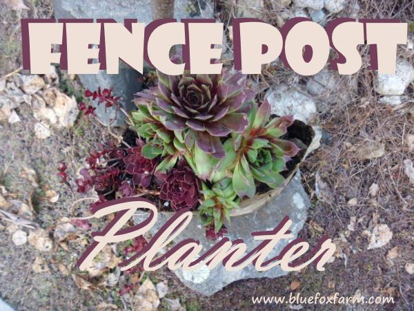 Fence Post Planter with hardy succulents...