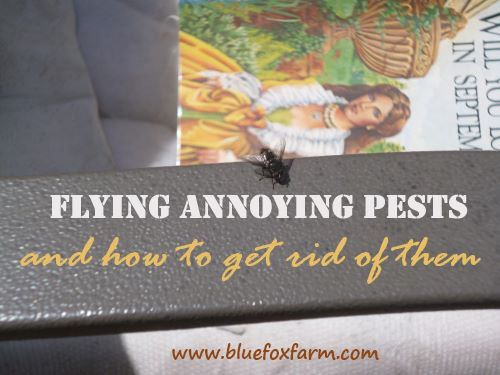 Annoying face flies and other pests buzz around your face.  Ew.