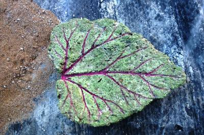 Small painted rhubarb leaf