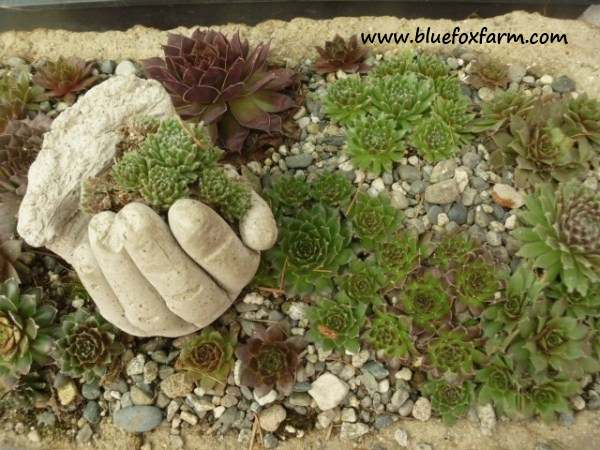 Hypertufa Hand in a bird cage planter