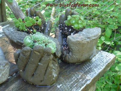 Grouping of hypertufa hands, filled with Sempervivum species