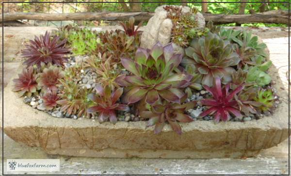 Hypertufa Trough made from a bird cage base