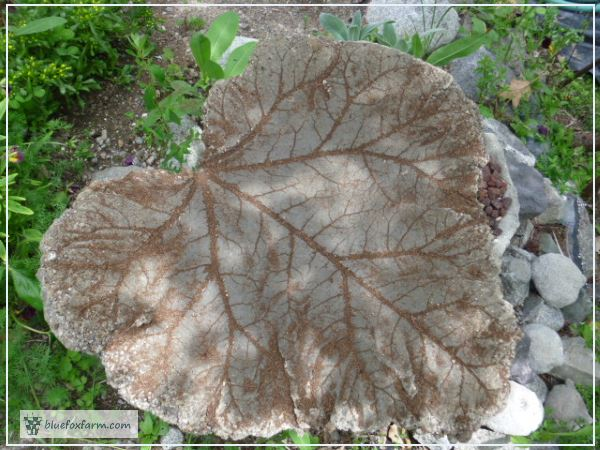Large Rhubarb Leaf