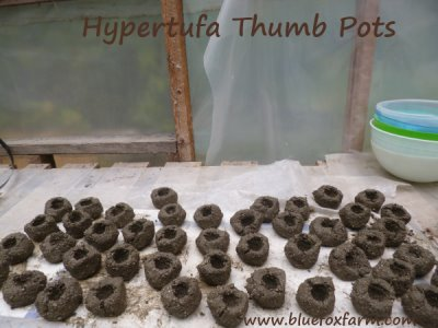 Hypertufa Thumb Pots - add a spoonful of soil, and a little Sempervivum or two...