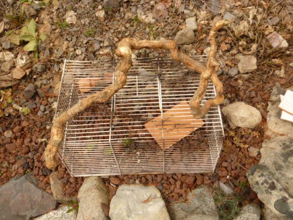Bird Cage with a wiggly twig handle