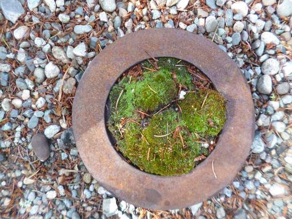 Moss Garden made from a Rusty Brake
