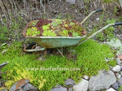 Green painted wheelbarrow - what a find!