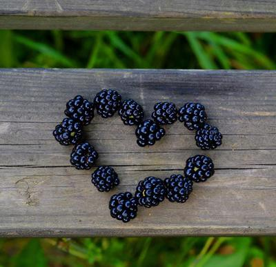 Blackberries!