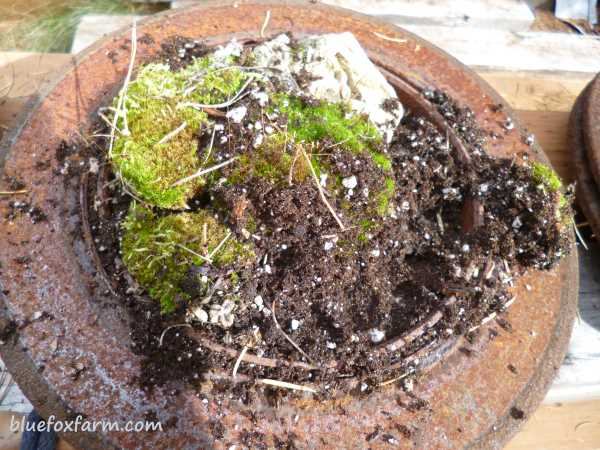 Added more old potting soil to hold it in place...