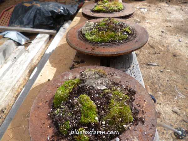 Garden Art Made from Trash - Brake Drum Moss Gardens