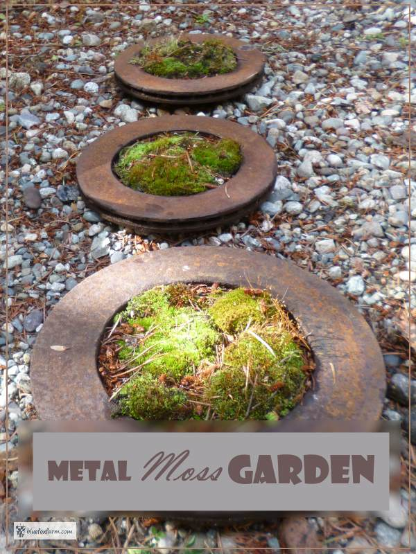 More Garden Art From Trash - Make a Metal Moss Garden from rusty brake parts