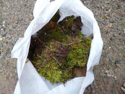 Gathering Wild Moss