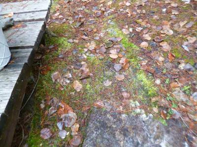 Moss Growing on Carpet