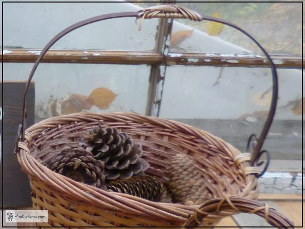 Pine cones in a basket