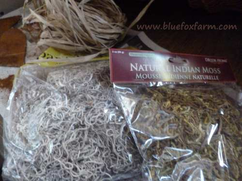 Indian moss, raffia and other purchases from the dollar store...