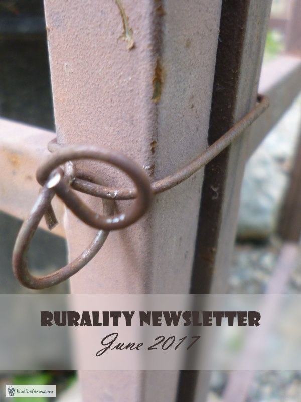 Rurality Newsletter - Rustic News
