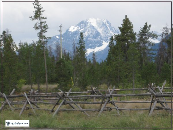 Russel Fence made with Jackpine rails