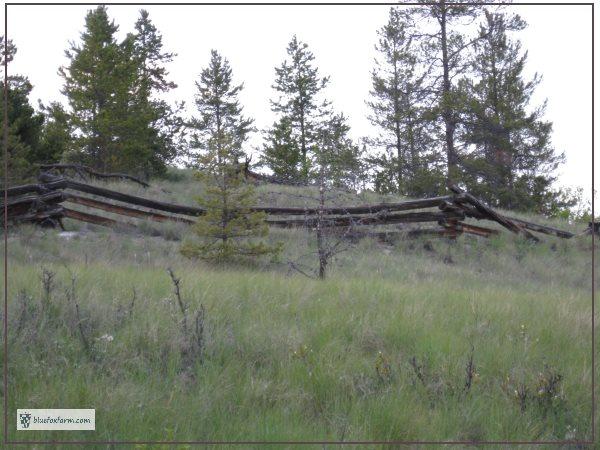Zig Zag Fence made of pine logs