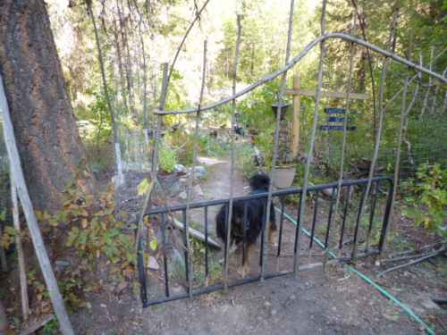 Bracken has checked out the Rustic Twig Gate, and approved it