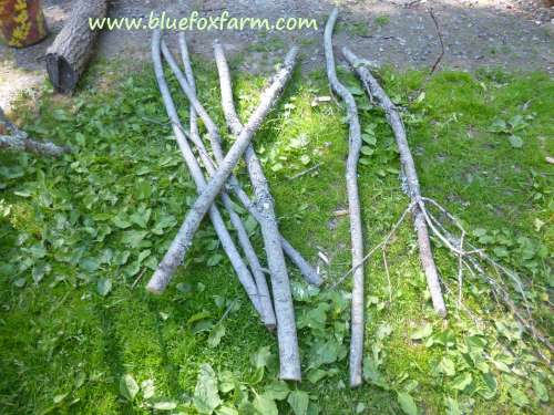 Twigs gathered from a roadside pruning crew