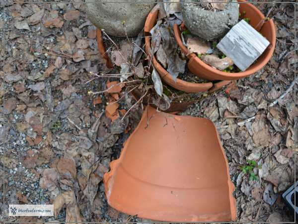 Terracotta Fairy Garden disaster...